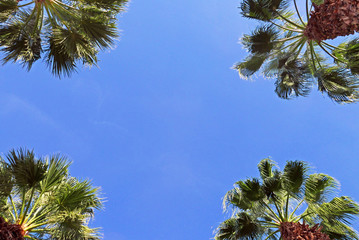 Four palm trees on background of blue sky