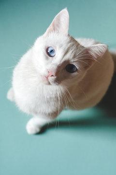 Portrait of a beautiful white cat