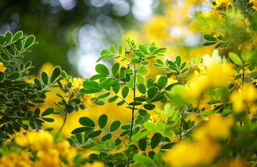 Lovely yellow flowers and plant leaves, closeup