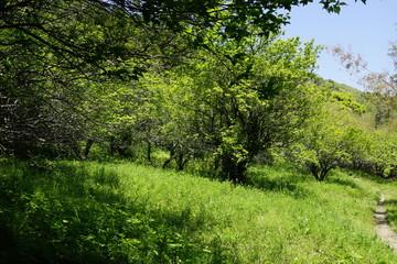 のどかな 森 木陰 風景 田舎 初夏 木々 草原