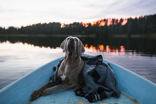 A dog in the boat