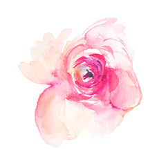 Isolated Pink Watercolor Flower Peony
