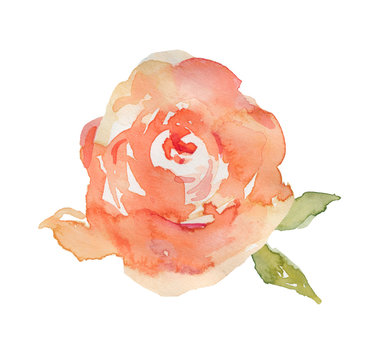 Watercolor Peonies On Isolated White Background with Hand Painted Leaves