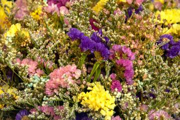 Beautiful chrysanthemum flowers background