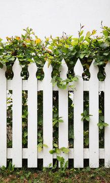 Idyllic fence and hedge
