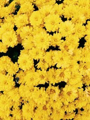 Wallpaper of autumn flowers
