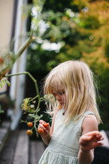 Little girl picking tomatos in backyard