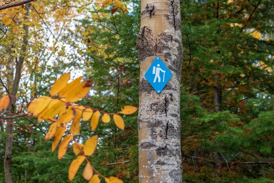 blue hiking trail marker on tree in Autumn