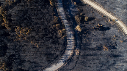 Burned forest in Galicia, Spain