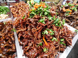 Fried insect as food,strange food in thai some people eat it as snack
