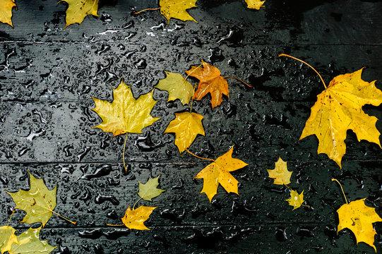 Foliage on wet wood