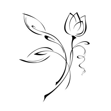 one Tulip Bud on a stem with leaves in black lines on white background