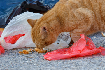 Red cat is eating from white and red bags on the ground