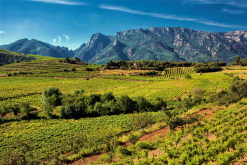Vineyards and mountains in the Saint Chinian wine region of the Languedoc, south of France Fototapete