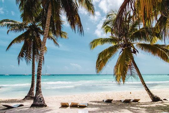 Saona Island near Punta Cana, Dominican Republic