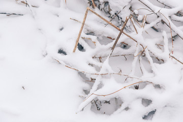 Snow background. Grass and reeds under the snow powder winter texture.