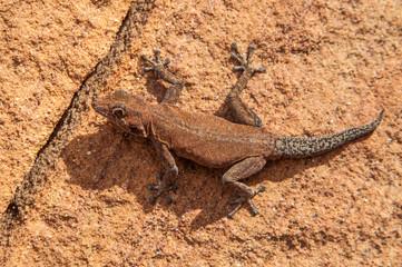 Damaraland, Namibia, a vast semi desert arid region in Namibia.