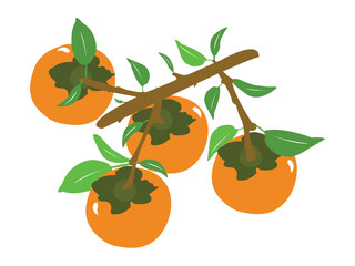 Vector fruit tangerine or orange branch, Abstract