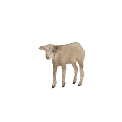 Watercolor white sheep lamb isolation on white background.