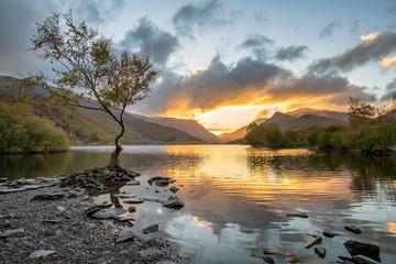 Lone Tree on Llyn Padarn, Snowdonia, Wales, UK.
