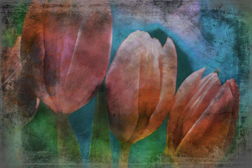 pink tulips flowers close up textured