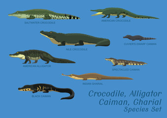 Various Crocodile Alligator Caiman Gharial Species Set Cartoon Vector Illustration