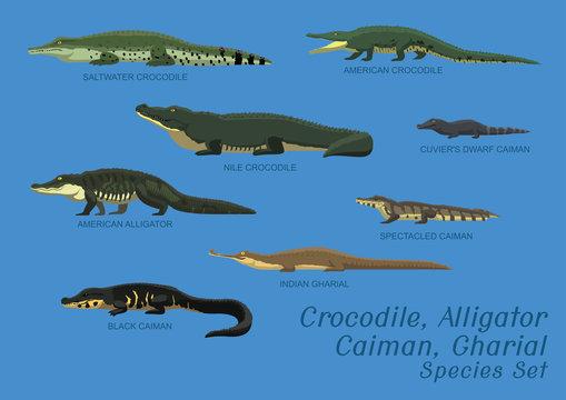 Various Crocodile Alligator Caiman Gharial Species Set Cartoon Vector Illustration