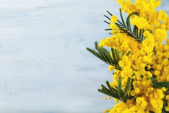 Border of mimosa flowers.
