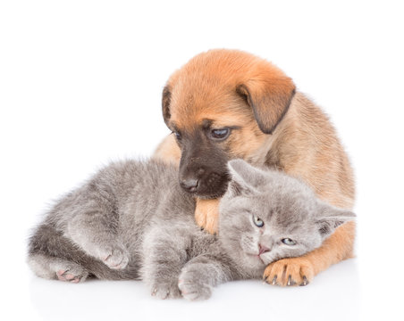 Mongrel puppy hugging kitten and looking at camera. Isolated on white background