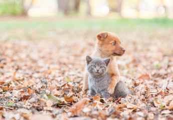 homeless puppy hugging a sad kitten on autumn leaves. Empty space for text
