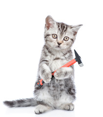 Kitten with hammer in paws looking at camera. Isolated on white background