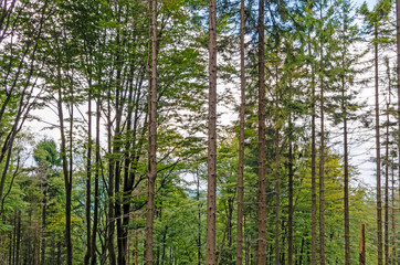 Trees in the Forest