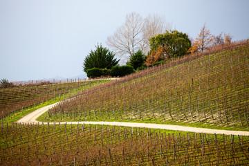 Hillside vineyard, Cromwell