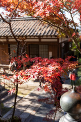eikando in kyoto