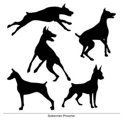 Dog Jumping. Isolated silhouette of a doberman pinscher on a white background