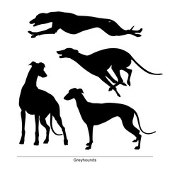 Greyhounds breed dog. Vector silhouette of the dog