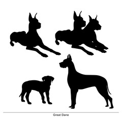 Great Dane breed dog. Vector silhouette of the dog