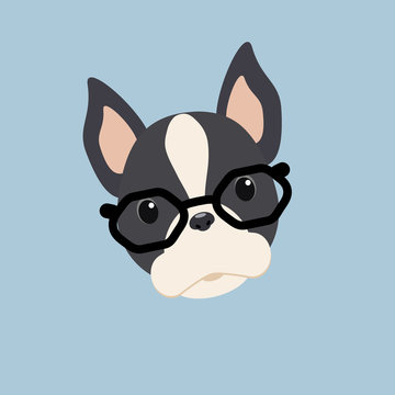 Vector dog breed Boston Terrier with glasses