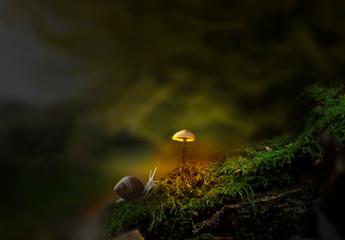 Fantasy forest with slug and glowing mushroom