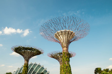 Fototapete - Gardens by the bay