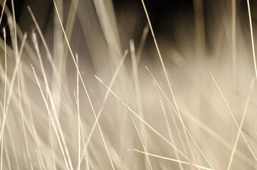 Abstract natural background with wild brown grass. Landscape with dry steppe grass.