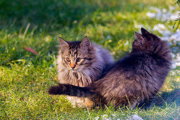 two beautiful young cats together outside