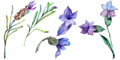 Purple lavender. Floral botanical flower. Wild spring leaf wildflower isolated. Watercolor background illustration set.