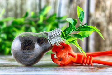 Plug and plant growing inside the light bulb. Green eco energy concept.