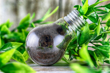 Plant growing inside the light bulb. Green eco energy concept.