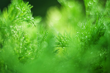 abstract (defocused, blurred)  natural grass background with beautiful bokeh.