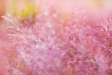 abstract (defocused, blurred) natural floral background with beautiful bokeh. sprong (summer) picture
