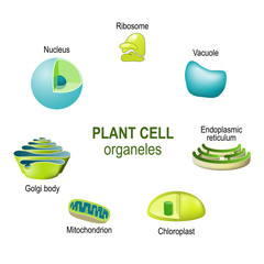 organelles of plant cells