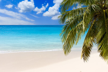 Palm tree and turquoise water of caribbean sea