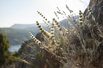 The Crimean herbs